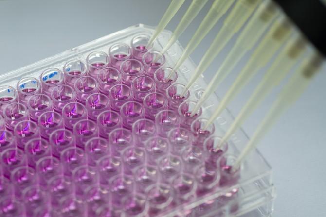 국내 의료기관에서 허가 없이 함부로 세포를 배양해 치료하면 불법이다.  - GIB 제공